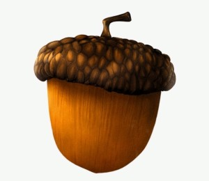 What Happens When An Acorn Wants To Become A Bmw
